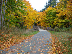 A leaf-strewn path in Colwood during autumn, leading to a bridge